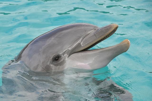 dolphin-3416542_1920.jpg